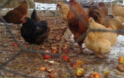 Bethlehem OKs middle schooler's fowl plan