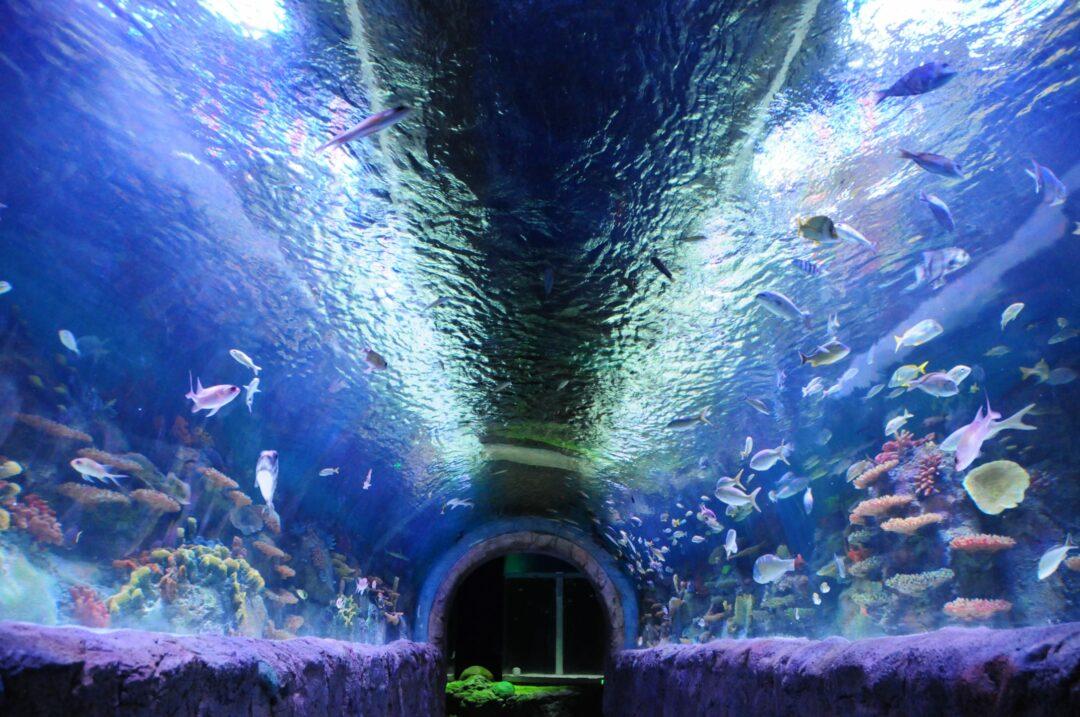 The Via Aquarium (photo by Mike Hallisey/spotlightnews.com)