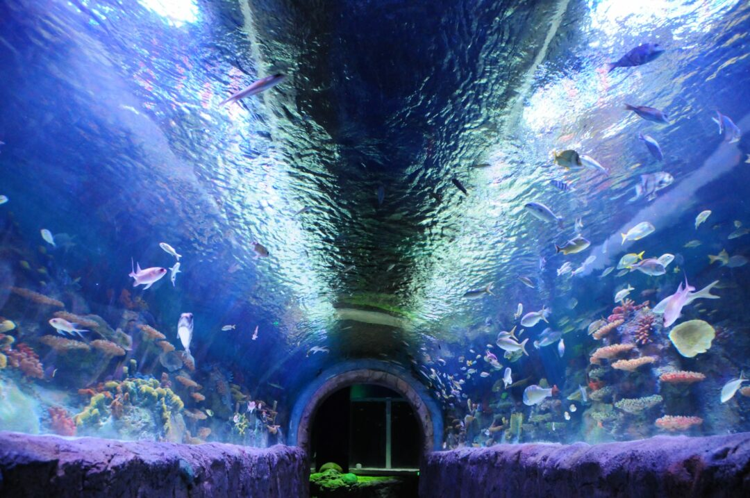 The tunnel aquarium holds 15,000 gallons of water, with an estimated weight of  60 tons. (Photo by Michael Hallisey / TheSpot518)