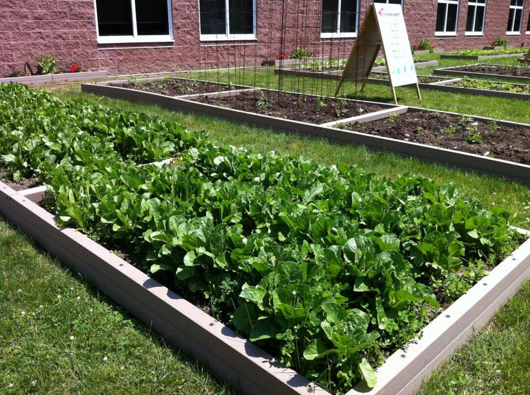 The garden at Bethlehem Middle School / BCSD