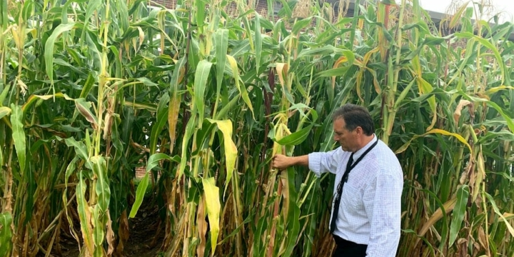 Bethlehem Central Middle School assistant principal Mark Warford offered a private tour of the school's gardens, showing how corn is among the many products being grown there. Diego Cagara / Spotlight News