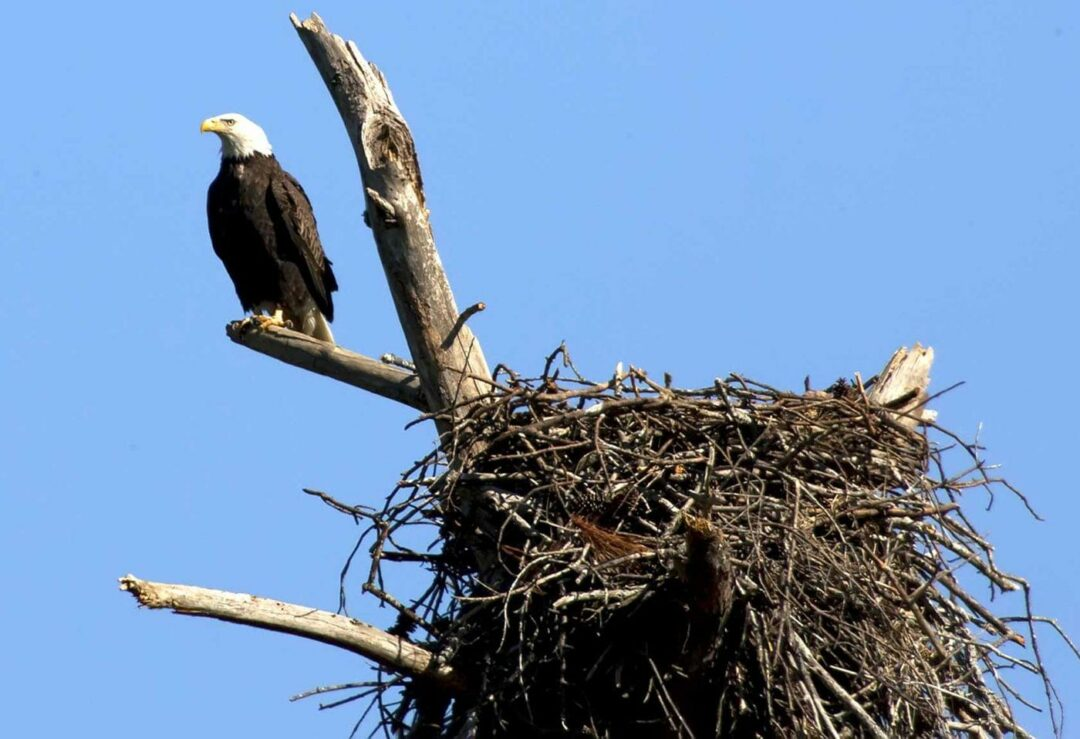 Photo via U.S. Fish and Wildlife Services